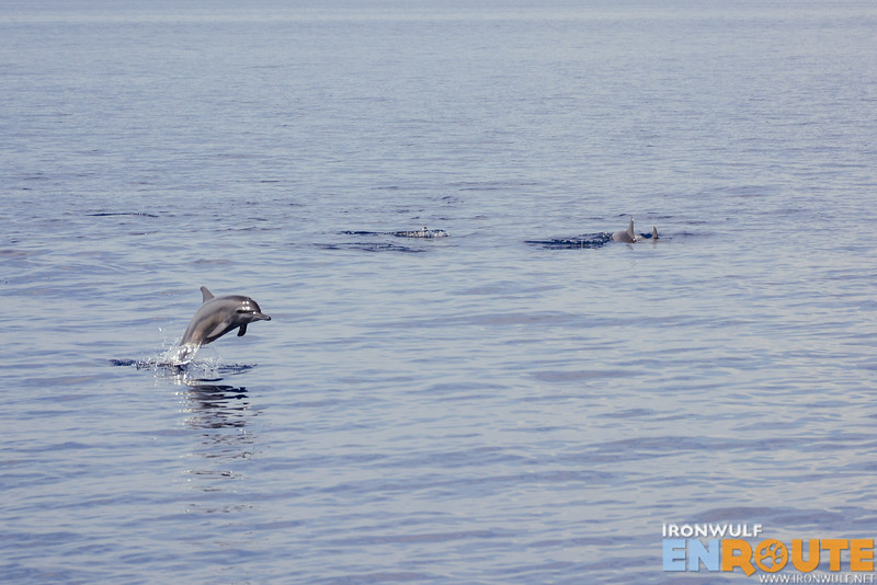 A playful dolphin jumps out to greet us in Bais Negros Oriental
